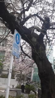 ゲッカヨ編集部ろぐ-110403_1604~010001.jpg
